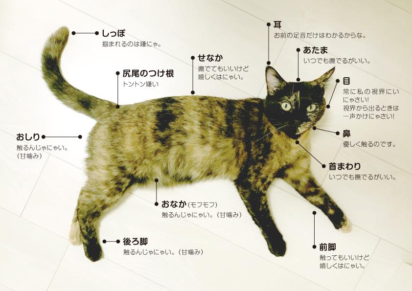 猫の触った時の反応一覧