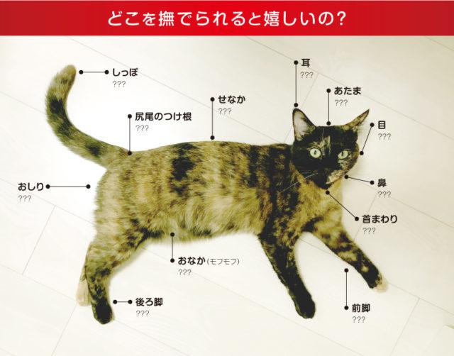 猫 触っていいところ嫌なところ