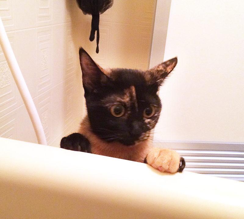 お風呂場に入ってきたサビ猫おビビ