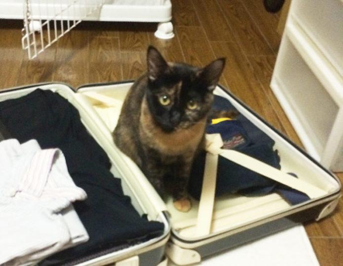 旅行バッグとサビ猫