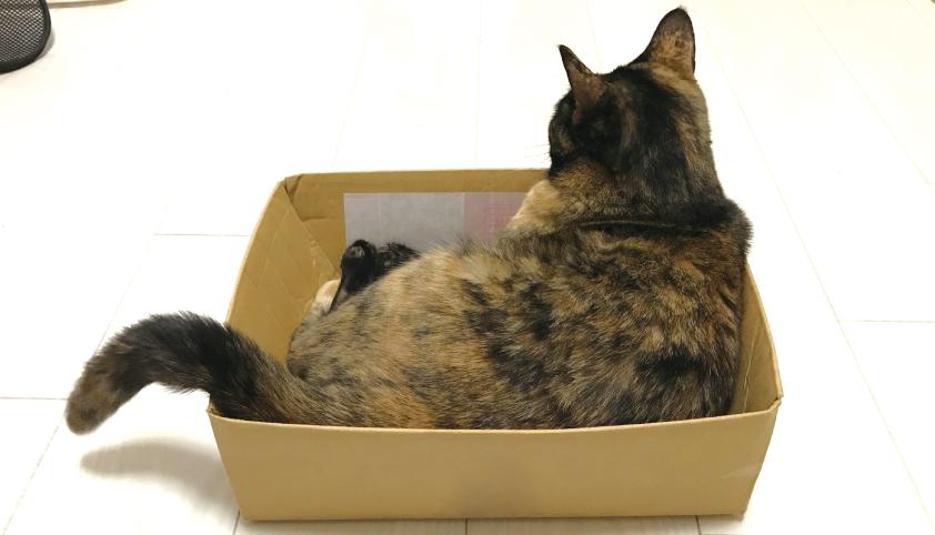 猫さまとダンボール箱