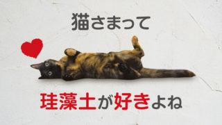 猫 珪藻土 バスマット 好き なぜ