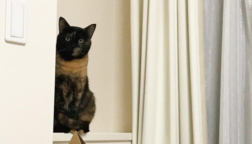 サビ猫 遠くから見つめる