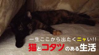 猫 こたつ メリット デメリット