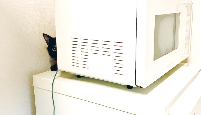 サビ猫,人見知り,可愛い