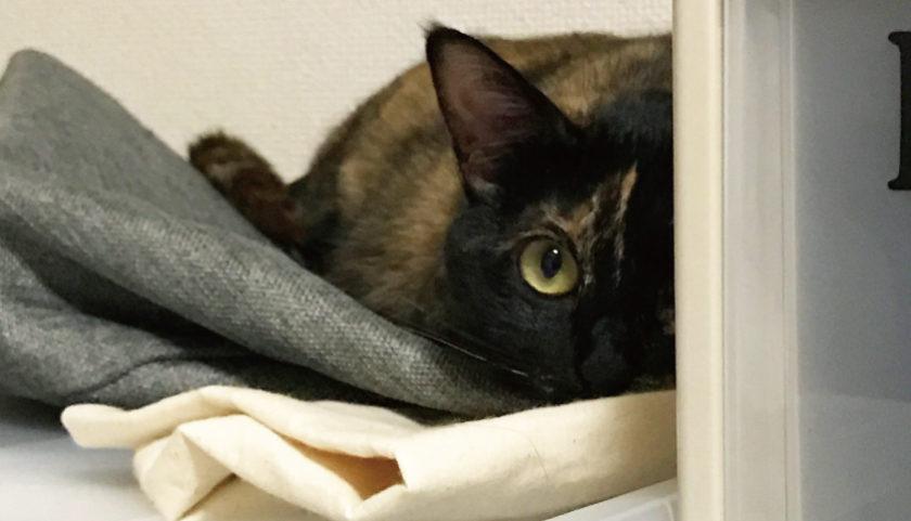 サビ猫 監視 可愛い