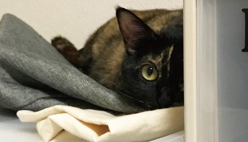 サビ猫,監視,可愛い