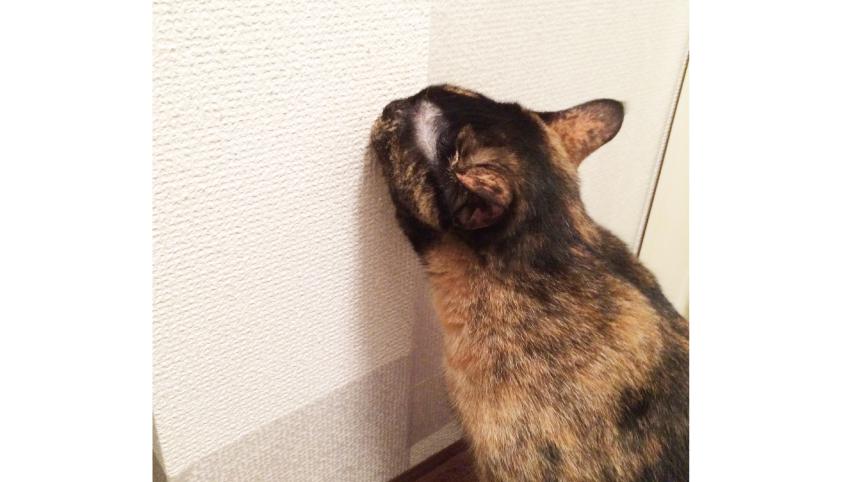 猫 爪とぎ 防止シート