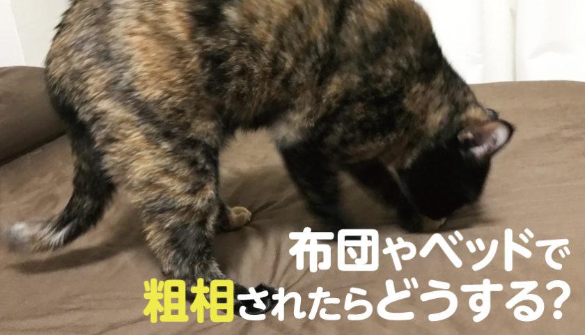 猫の粗相 分離不安