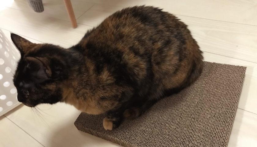 ガリガリウォールスクラッチャー の部品の上に乗るサビ猫