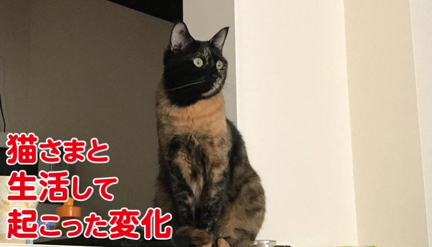 猫 生活 変化