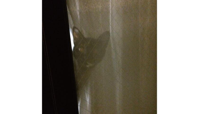 僕の帰りを待っているサビ猫