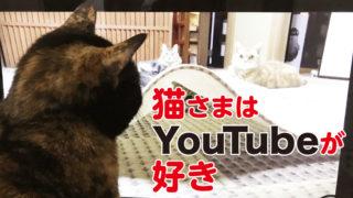 猫 喜ぶ 動画