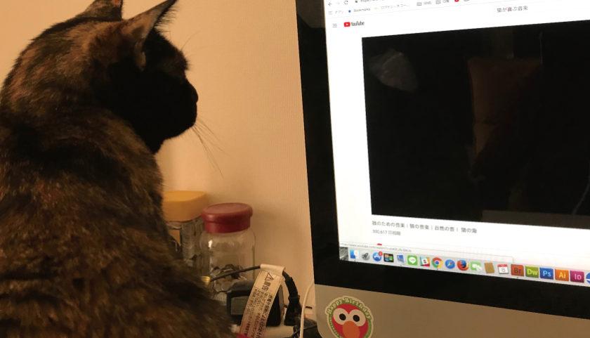 サビ猫 猫のための音楽