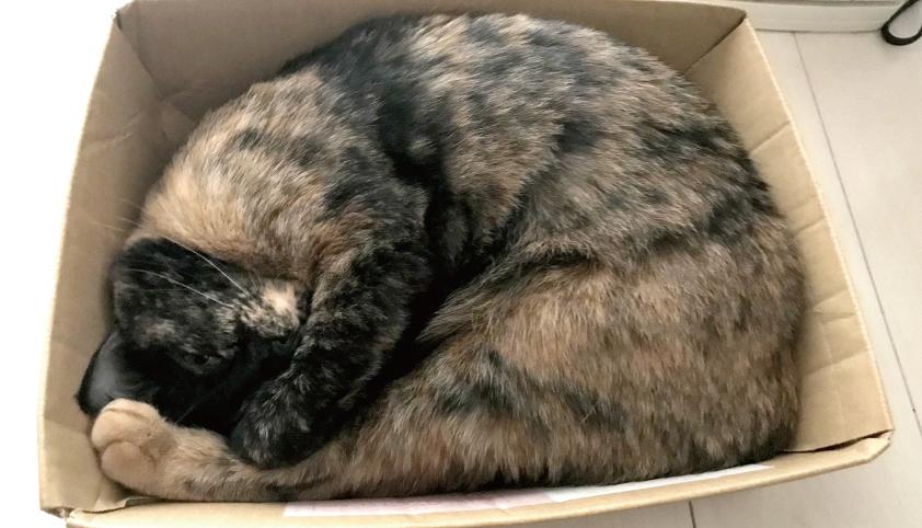 箱で眠る猫