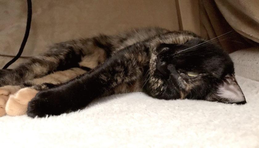 半目で寝ている猫