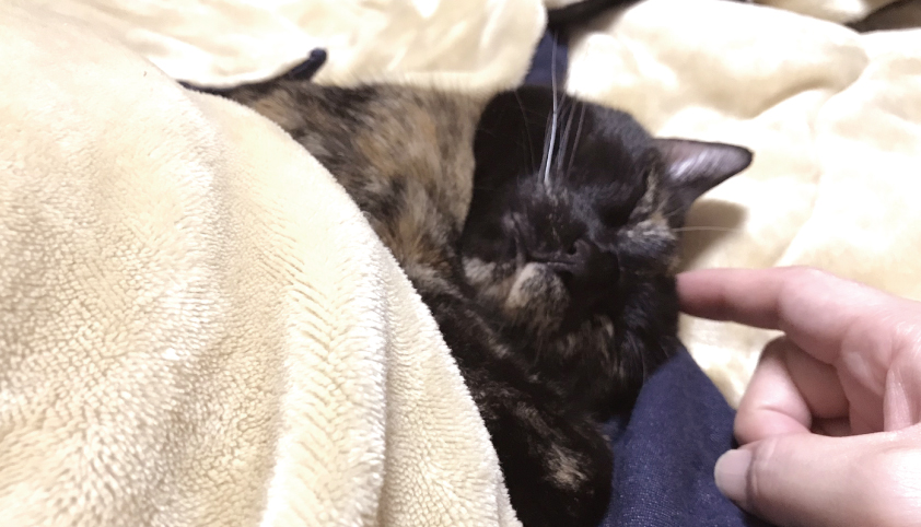 布団で眠る天使