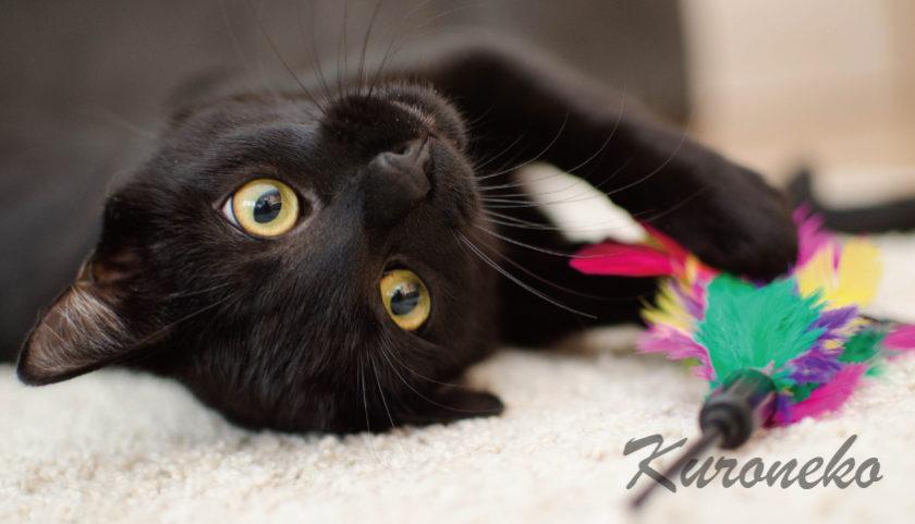 黒猫を飼いたい理由