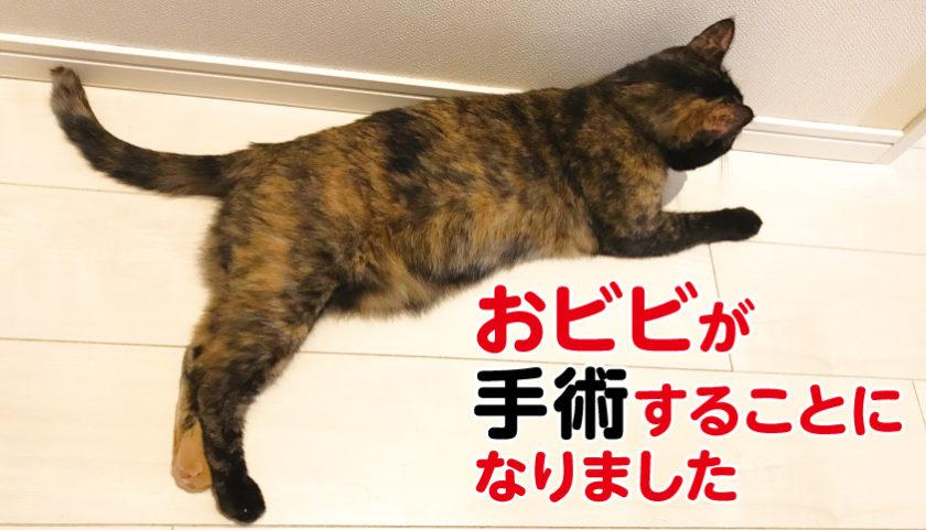 猫 手術 肥満細胞腫