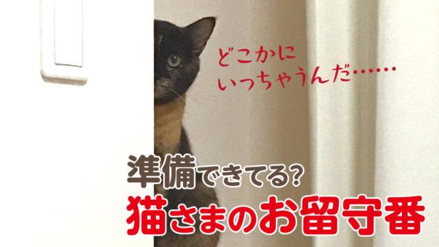猫 留守番 一泊