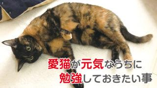 猫 シニア 勉強