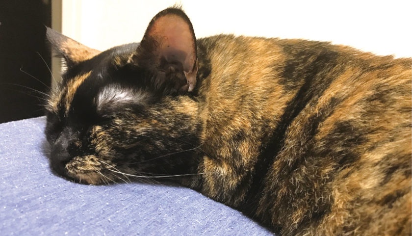 猫 シニア 病気 勉強