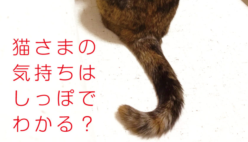 猫 しっぽ 感情