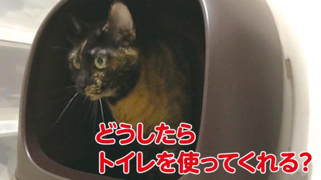猫 トイレ しつけ