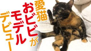 サビ猫 グッズ モデル