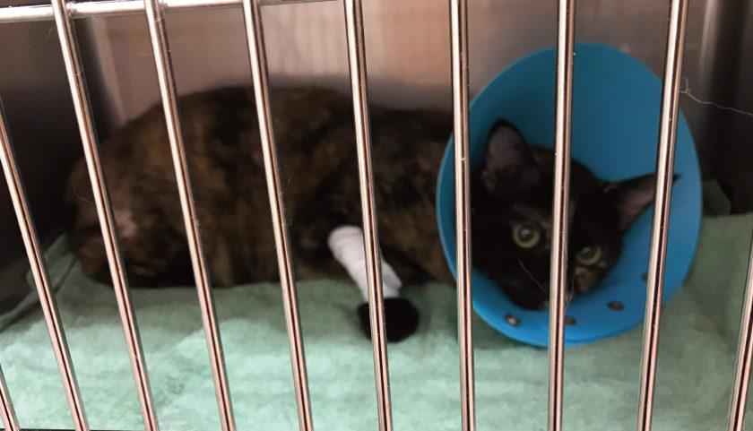 猫 手術 面会