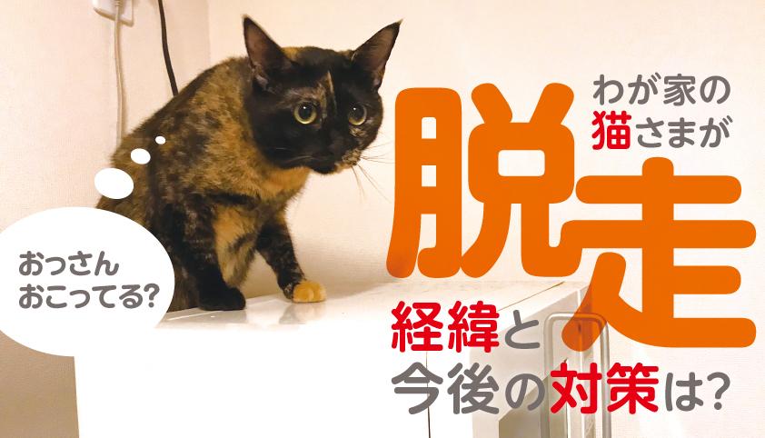 猫 脱走 対策 予防