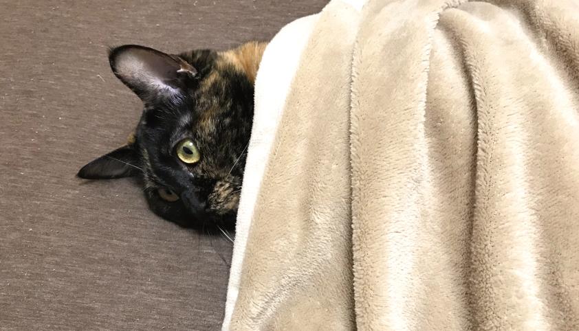猫 ゴロゴロ 病気 怪我 不安