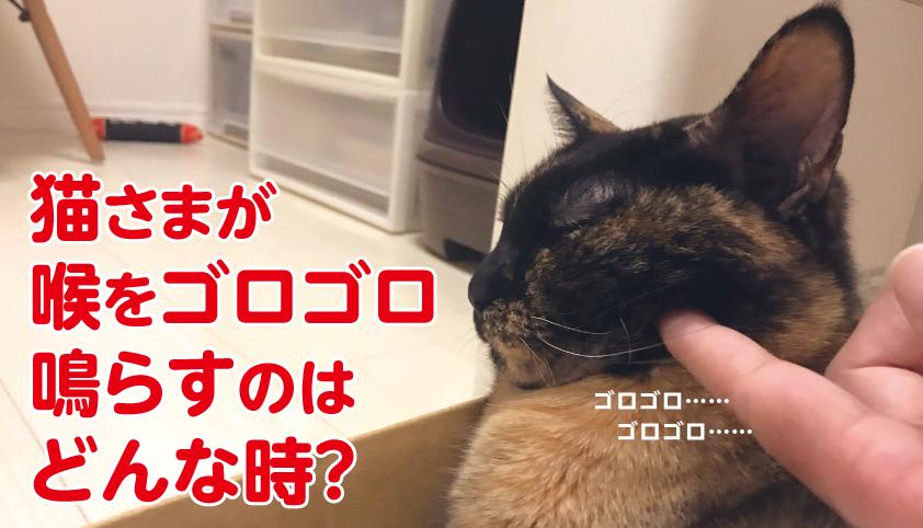猫 ゴロゴロ 理由