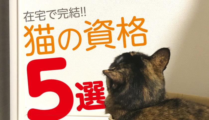 猫 資格 在宅