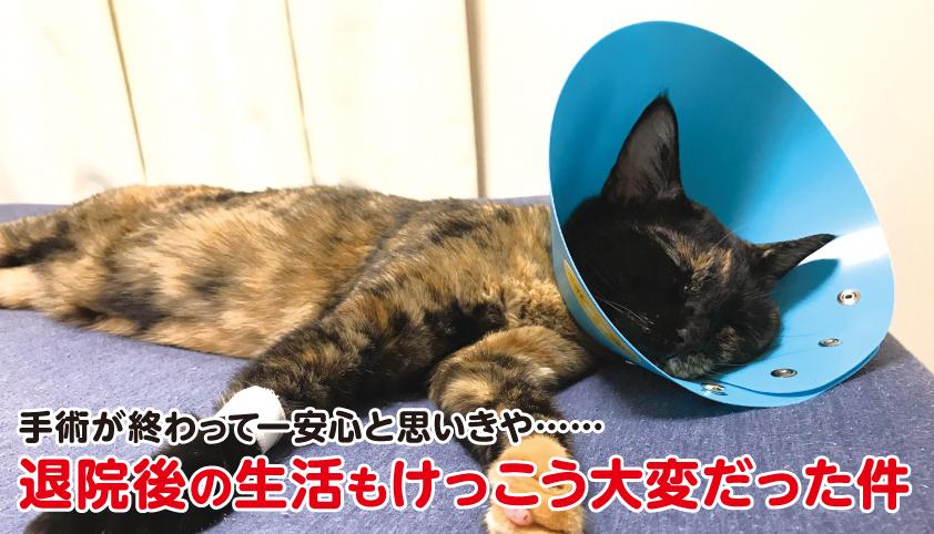 猫 手術 後 退院 生活