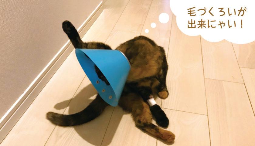 猫 エリザベスカラー 不便