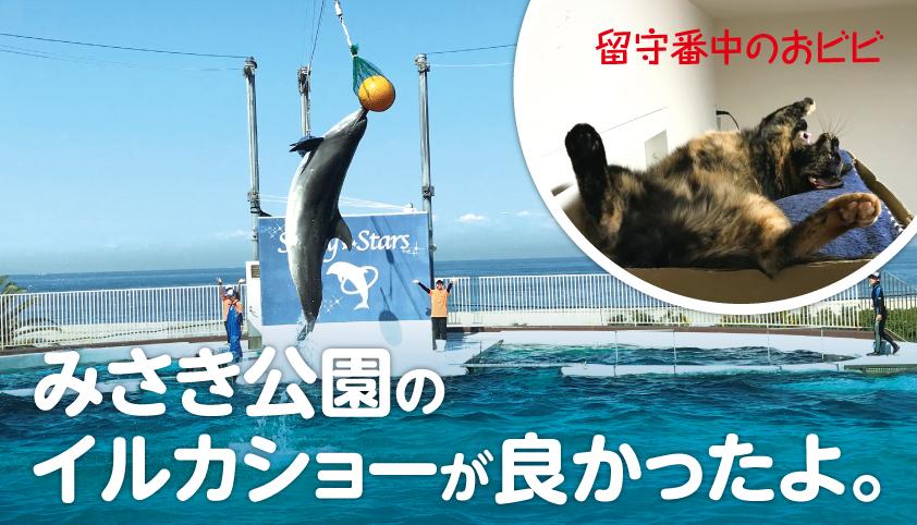 みさき 公園 イルカ ショー