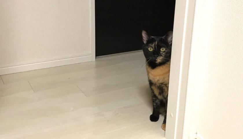 サビ猫 監視してくる