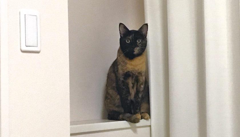 サビ猫 監視してくる 翌日