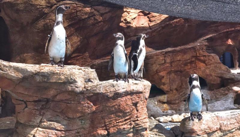 みさき公園 シャイニースタジアム ペンギン 群れ