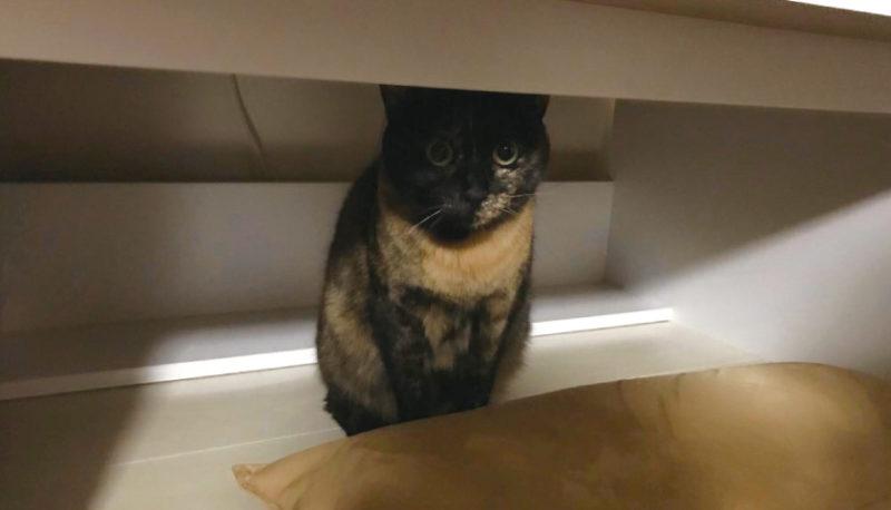 しもべを監視する猫