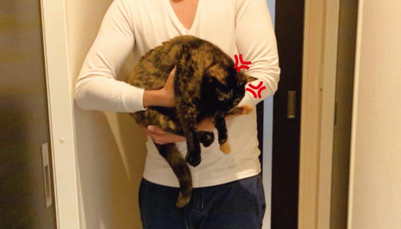 猫さまを運ぶしもべ