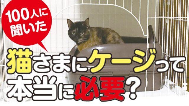 猫にケージは必要?不要?