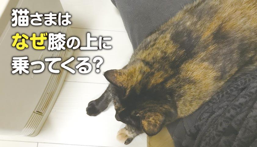膝の上 温まる サビ猫